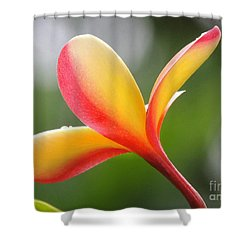 Shower Curtain featuring the photograph Yellow Pink Plumeria by Kristine Merc