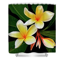 Yellow Plumeria Shower Curtain by Ben and Raisa Gertsberg