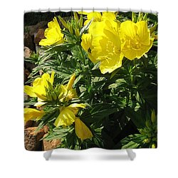 Yellow Primroses Shower Curtain