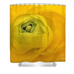 Yellow Ranunculus  Shower Curtain