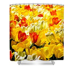 Yellow Red And White Tulips Shower Curtain by Menachem Ganon