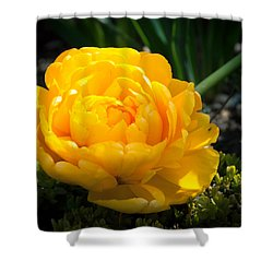 Shower Curtain featuring the photograph Yellow Rose by Dee Dee  Whittle