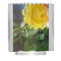 Yellow Rose- Greeting Card Shower Curtain