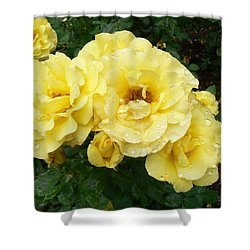Yellow Rose Of Pa Shower Curtain by Michael Porchik