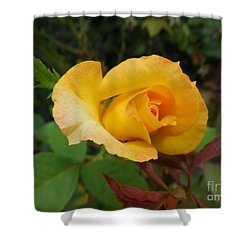 Yellow Rose Of Texas Shower Curtain by Eloise Schneider