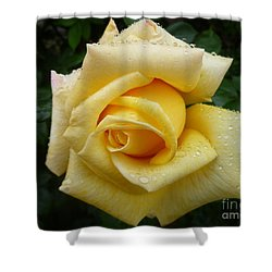 Yellow Rose Say Goodbye Shower Curtain