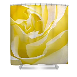 Yellow Rose Shower Curtain by Svetlana Sewell