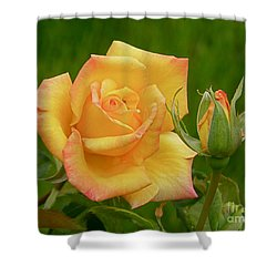 Shower Curtain featuring the photograph Yellow Rose With Bud by Debby Pueschel