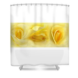 Yellow Roses Triptych Panel Shower Curtain by Jennie Marie Schell