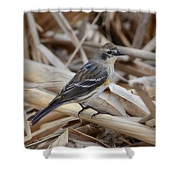 Yellow-rumped Warbler Shower Curtain by Debra Martz