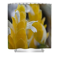 Yellow Shrimp Swirl Shower Curtain by Penny Lisowski