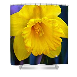 Shower Curtain featuring the photograph Yellow Spring Daffodil by Kay Novy