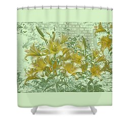 Yellow Stargazers On Soft Green Shower Curtain by Tom Wurl