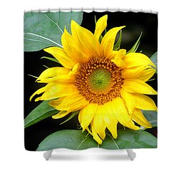 Yellow Sunflower Shower Curtain by Trina  Ansel