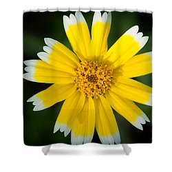 Yellow Sunshine  Shower Curtain