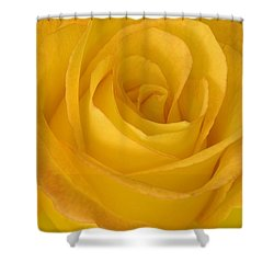 Yellow Tea Rose Shower Curtain by John Pitcher