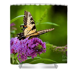 Yellow Tiger Swallow Tail Butterfly Shower Curtain