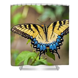 Yellow Tiger Swallowtail Shower Curtain by Debbie Green