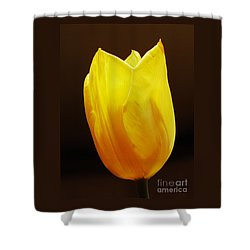 Yellow Tulip 3 Shower Curtain by Sarah Loft