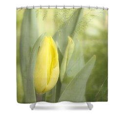 Yellow Tulip Bud Shower Curtain by Kim Hojnacki