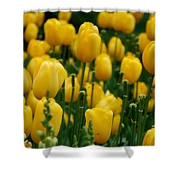 Yellow Tulip Sea Shower Curtain by Jennifer Ancker