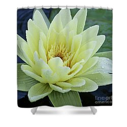 Yellow Water Lily Nymphaea Shower Curtain by Heiko Koehrer-Wagner
