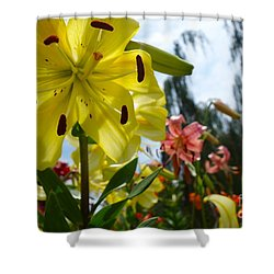 Yellow Whopper Lily 1 Shower Curtain by Jacqueline Athmann