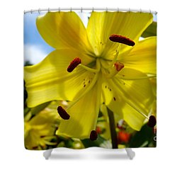 Yellow Whopper Lily 2 Shower Curtain by Jacqueline Athmann