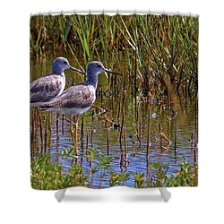 Shower Curtain featuring the photograph Yellowlegs Of Texas by Gary Holmes