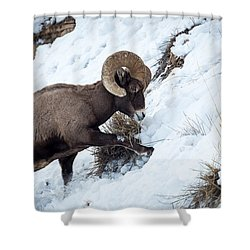 Yellowstone Bighorn Shower Curtain