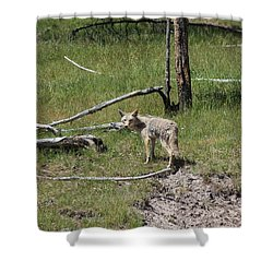 Yellowstone Coyote Shower Curtain
