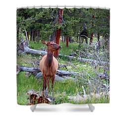 Yellowstone Moments. Doe Shower Curtain by Ausra Huntington nee Paulauskaite