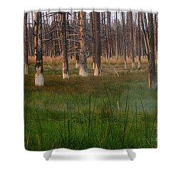 Shower Curtain featuring the photograph Yellowstone Mysterious Morning by Teresa Zieba