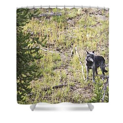 Shower Curtain featuring the photograph Yellowstone Wolf by Belinda Greb