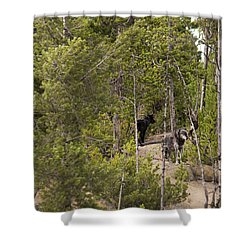 Yellowstone Wolves Shower Curtain by Belinda Greb