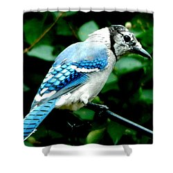 Shower Curtain featuring the photograph Yes..... by Betty-Anne McDonald