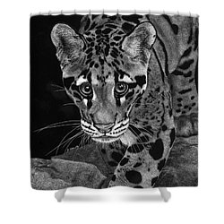 Yim - The Clouded Leopard Shower Curtain