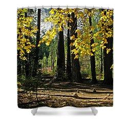 Shower Curtain featuring the photograph Yosemite Fen Way by John Haldane