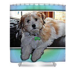 Yoshi Havanese Puppy Shower Curtain by Barbara Griffin