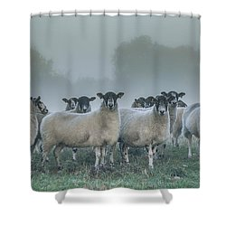 You And Ewes Army? Shower Curtain by Chris Fletcher