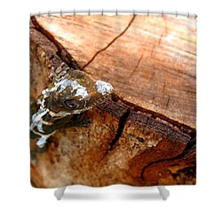 Shower Curtain featuring the photograph You Can See Me? by Greg Allore