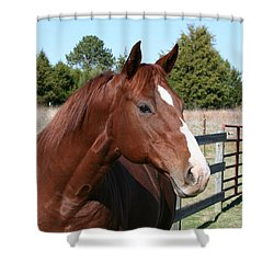 Shower Curtain featuring the photograph You Got My Attention by Cathy Harper