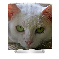 Shower Curtain featuring the photograph You Lookin At Me by Sherman Perry