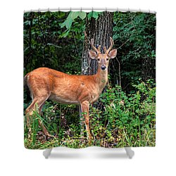 You Looking At Me Shower Curtain by Rick Friedle