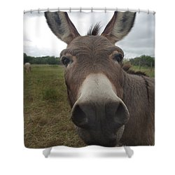 Shower Curtain featuring the photograph You Looking At My Woman by Peter Piatt