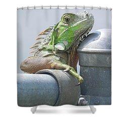 You Look'n At Me Shower Curtain by Chrisann Ellis