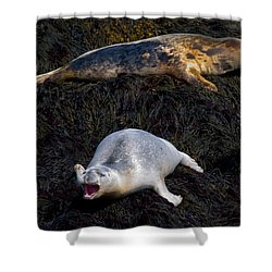 You Never Listen 5623 Shower Curtain by Brent L Ander
