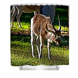 Youngster Addax Shower Curtain