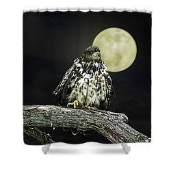 Young Bald Eagle By Moon Light Shower Curtain by John Haldane