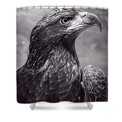 Young Bald Eagle V3 Shower Curtain by F Leblanc